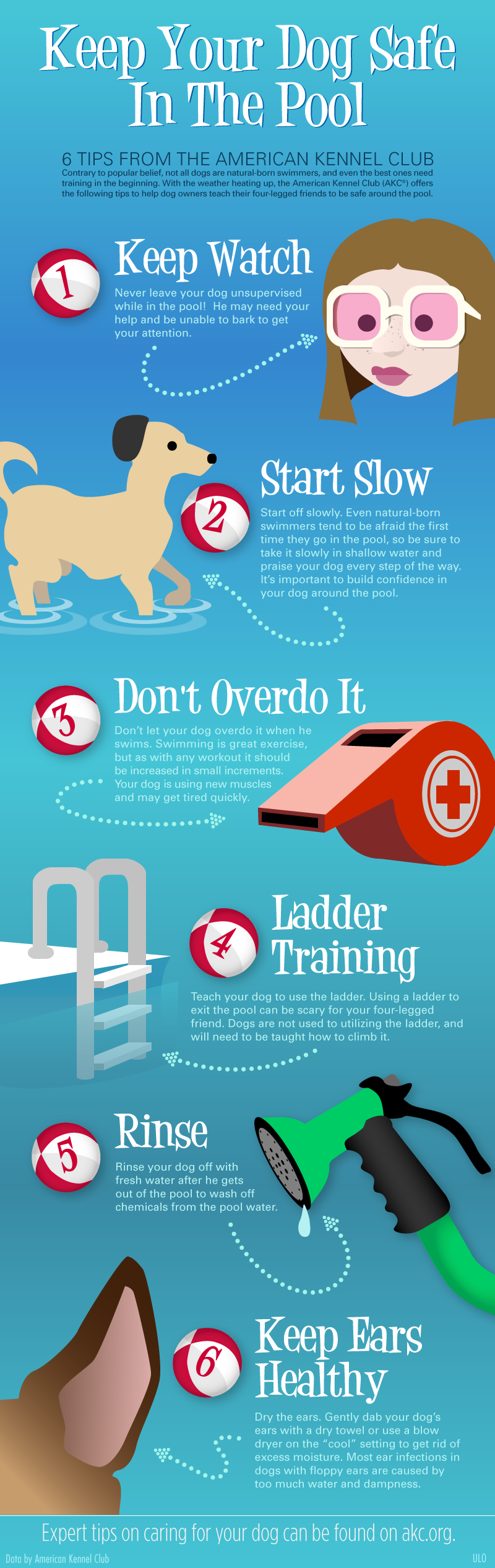 Keep Your Dog Safe in the Pool by American Kennel Club